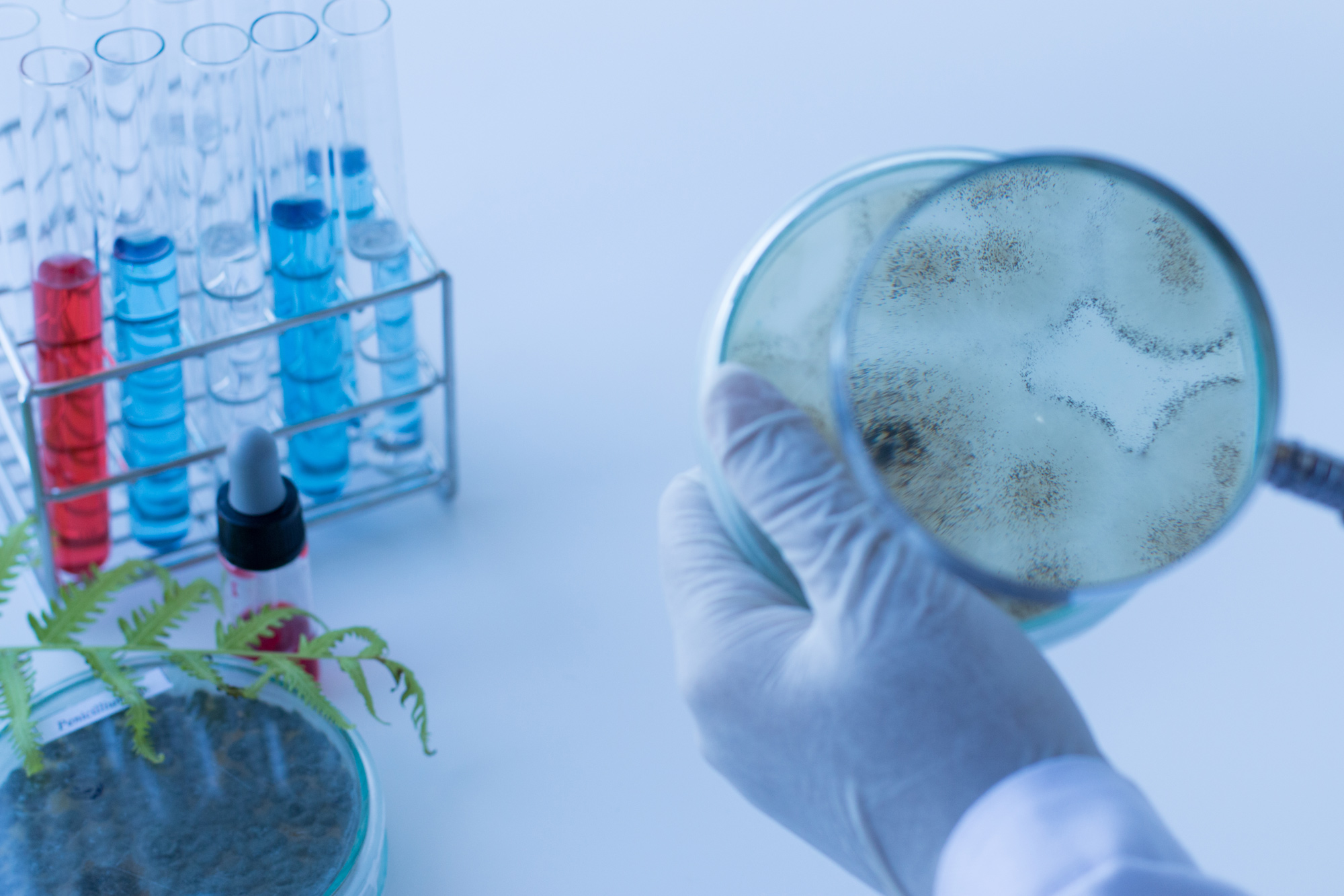 Bacteria Mould & Spore Removal